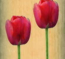 Spring Tulips by Christine Lake