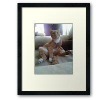 cat,ginger cat, Framed Print