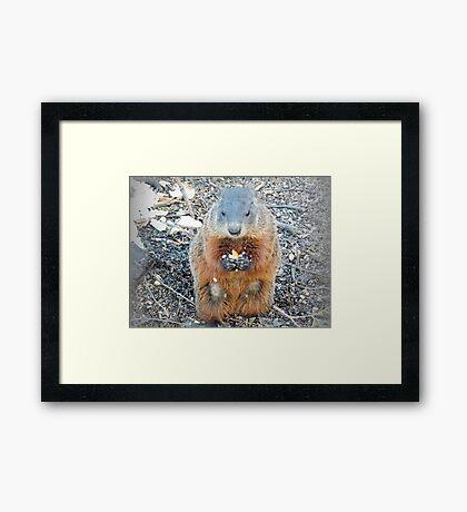 Ground Hog Framed Print