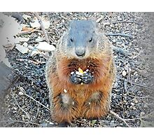 Ground Hog Photographic Print