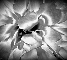 Azalea in Black and White by Philippa Garrod Brown