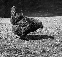The picker. by Gabriele Maurus