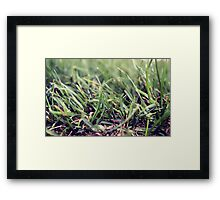 Grass Photography Framed Print