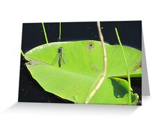 Firefly on waterlily Greeting Card