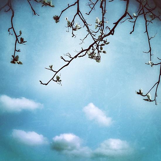 Skyward by AllyNCoxon