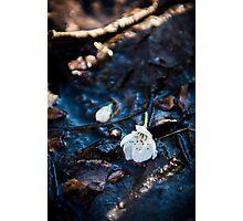 Nature Photography Photographic Print