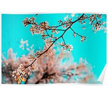 Nature Photography Poster