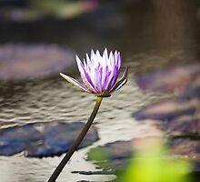 Flower by mafmafmaf