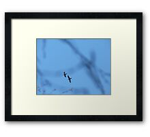 Two birds in the sky Framed Print