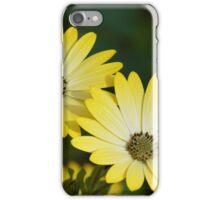 Cape Daisies iPhone Case/Skin