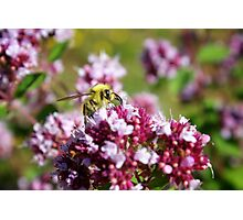 Bees and their Flowers Photographic Print