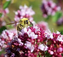 Bees and their Flowers by CrosslightPhoto