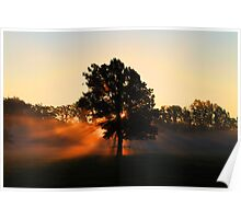 Tree in the Morning Sunrise Poster