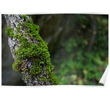 Mossy Branch Poster