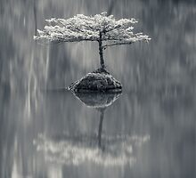 Fairy Lake Fir BW by Carrie Cole