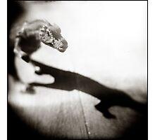 { rex } Photographic Print