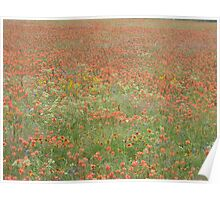 Encroachment on Indian Paintbrush Field Poster
