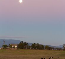 Yarra Valley moon by Maddison Falls