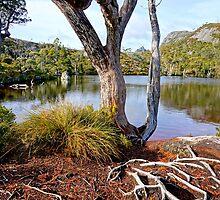 Wombat Pool by Harry Oldmeadow