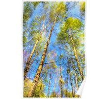 A Summer Forest Poster