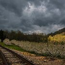 The Apple Orchard by JKKimball