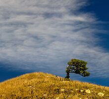 Hill by Werner Padarin