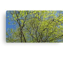 Birch leaf is alive Canvas Print