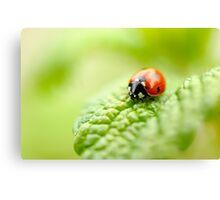 ladybug red green Canvas Print