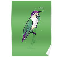 Hmmming Bird Poster