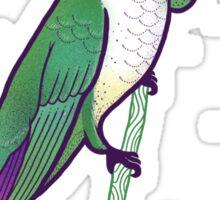 Hmmming Bird Sticker