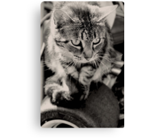 The King Cat Canvas Print