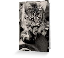 The King Cat Greeting Card