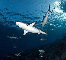 Sharky Time by Valerija S.  Vlasov