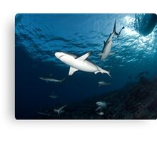Sharky Time Canvas Print