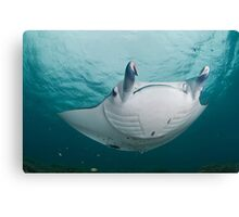 Manta Ray UFO Canvas Print