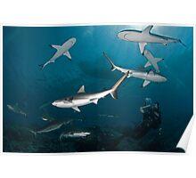 Sharkography Poster