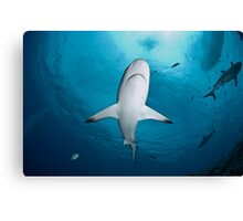 Shark Close Up Canvas Print
