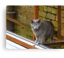 Cat In The Alley Canvas Print