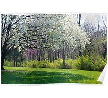 Spring Scene Poster