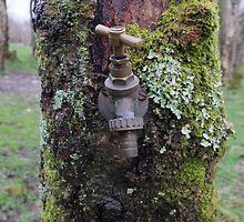 Tap that tree by woodlandninja