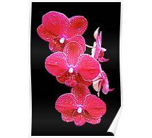 Orchid Magic II Poster