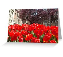 Colorful Tulips, Murray Hill, New York City Greeting Card