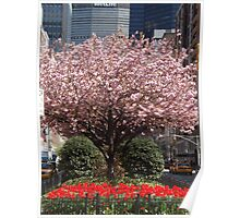 Colorful Tulips, Spring Colors, Murray Hill, New York City Poster