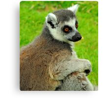Lemur One Canvas Print
