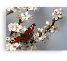 Peacock butterfly. Canvas Print