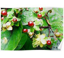 Summer Berry Red Poster