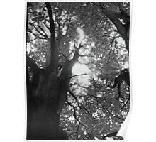 Tree Design Poster