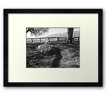 Dog on the Grass Framed Print