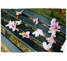 Petals on Park Bench Poster