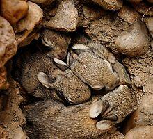 Nest of Bunnies #1 by johnny gomez